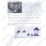 ГДЗ решебник рабочая тетрадь по биологии 5 класс Самкова В.А., Рокотова Д.И. 2016 ответы стр. 24