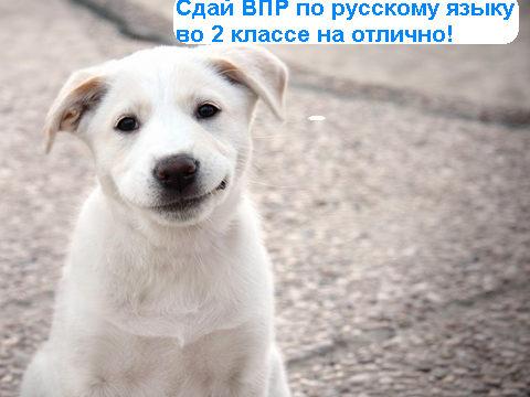 Впр по русскому языку 2 класс 2017