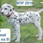 ВПР 6 класс русский язык 2019 тренировочные варианты с ответами