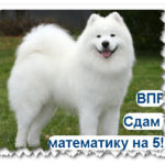 ВПР-2019. Математика 4 класс. Варианты с ответами