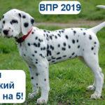 ВПР русский язык 7 класс 2019 варианты с ответами