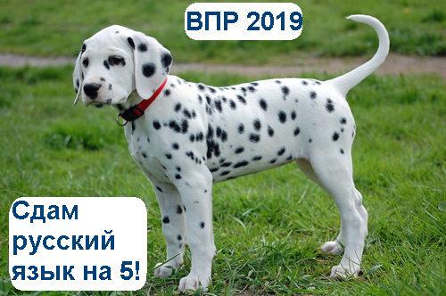 ВПР русский язык 4 класс