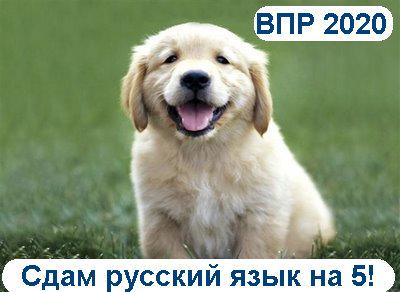 ВПР русский язык 8 класс